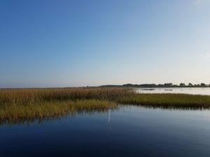Maidencane grass and reeds