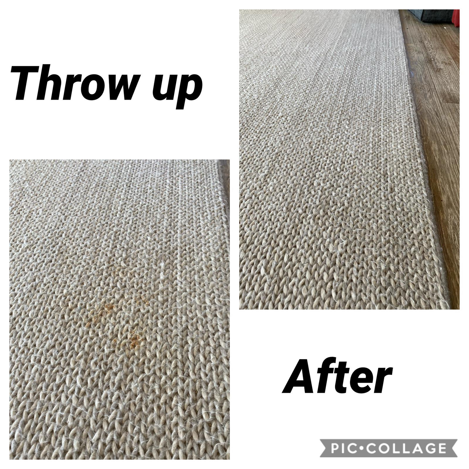 pet stain removal carpet cleaning service
