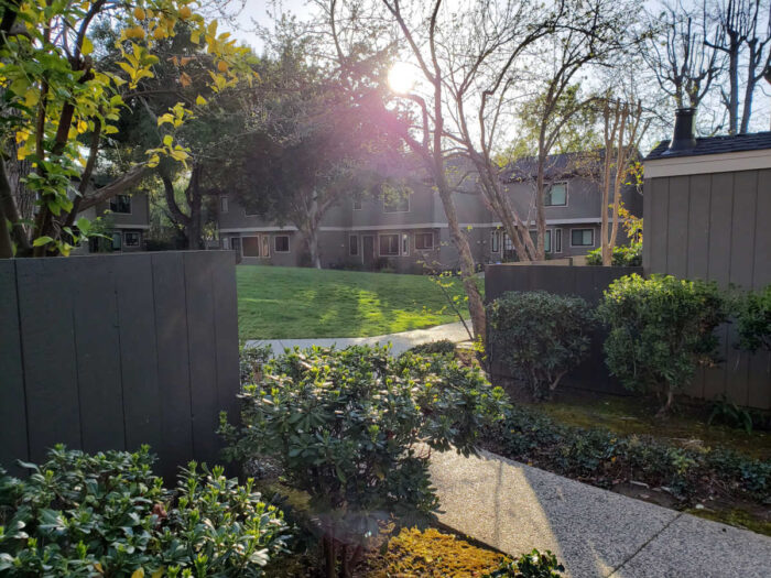 Greenbelt View in the late afternoon at Las Casitas townhomes - 435 Alberto Way, Los Gatos
