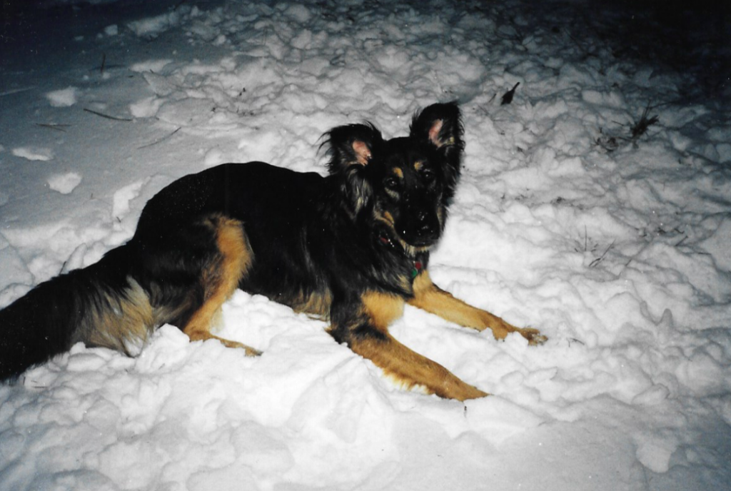 Abby in the snow