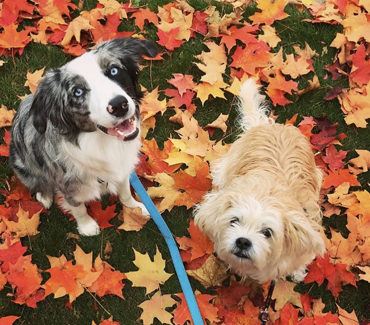Hazel and Colby - Ontario, Canada
