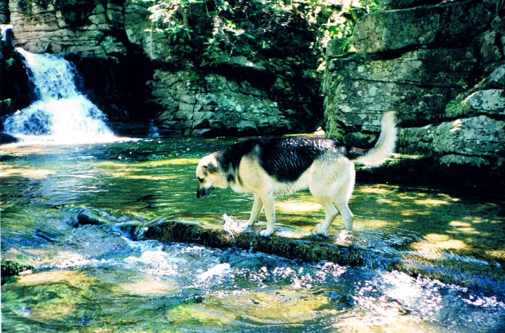 Shanny enjoying the water