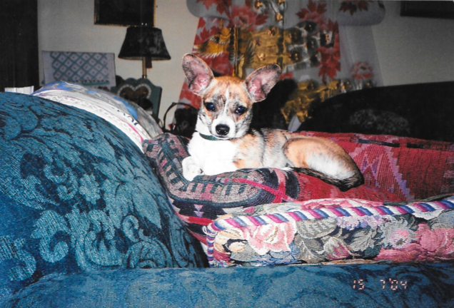 Puppy Carmen