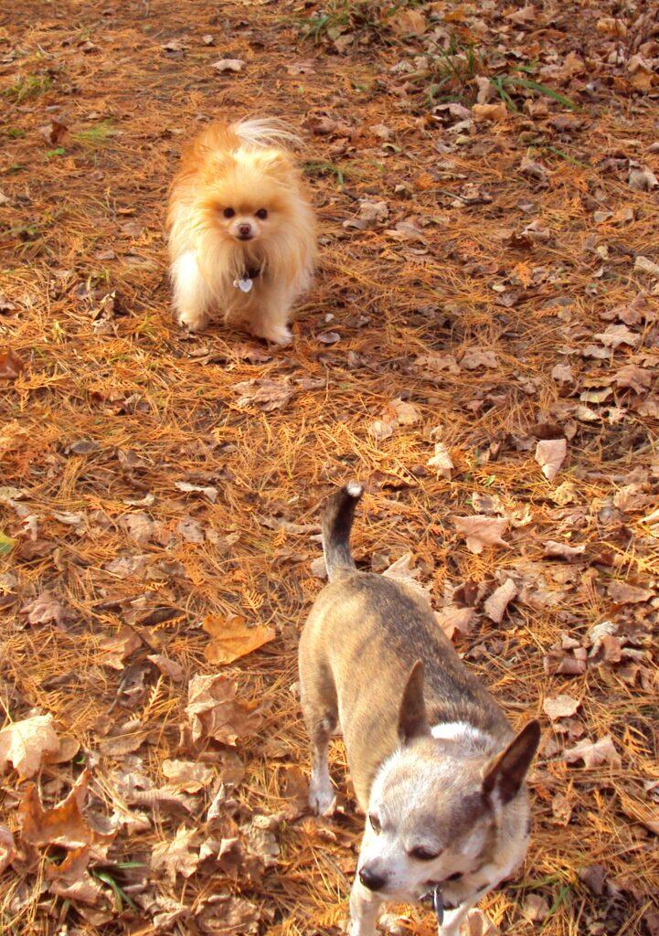 Jacob and Carmen on an autumn walk