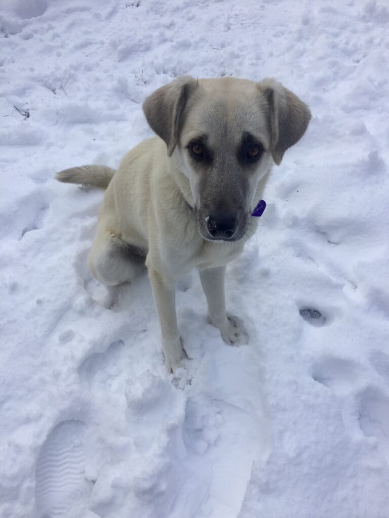 Lily's first winter