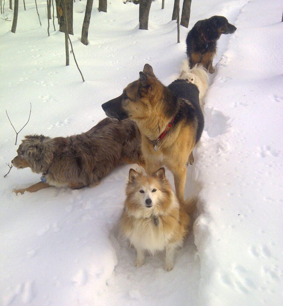Stevie, Jordie, Tasha, Zoey and Abby in the wintertime