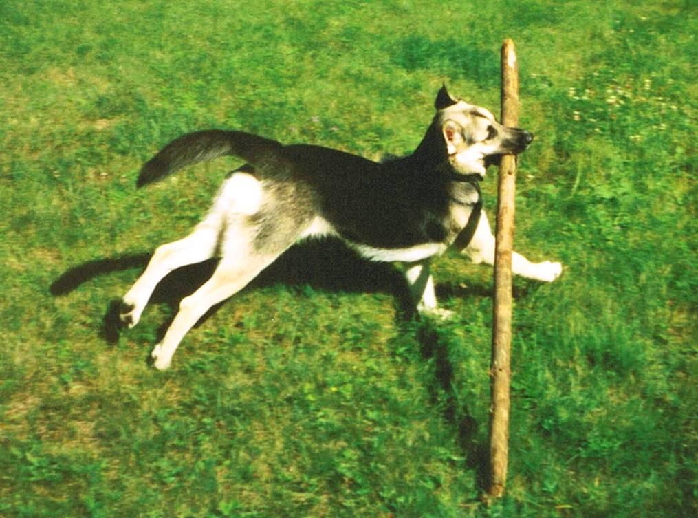 Shanny, the big stick champion