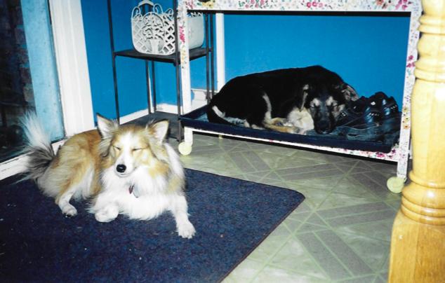 Stevie and puppy Jordie