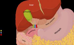 Hepatoduodenal_ligament