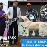Best of Gundog Group at the 158th EAKC Championship Dog Show