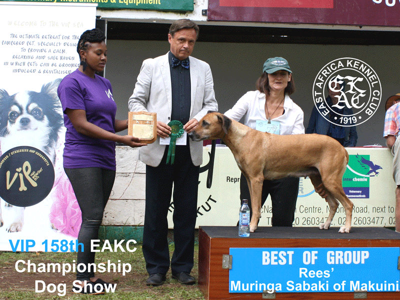 Best of Hound Group at the 158th EAKC Championship Dog Show