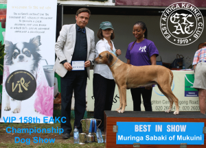 158th EAKC Championship Dog Show BEST IN SHOW