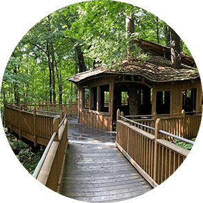 A treehouse in the forest canopy
