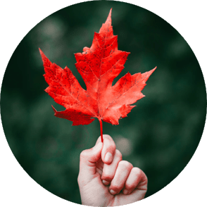 A person's hand holding up a fall maple leaf