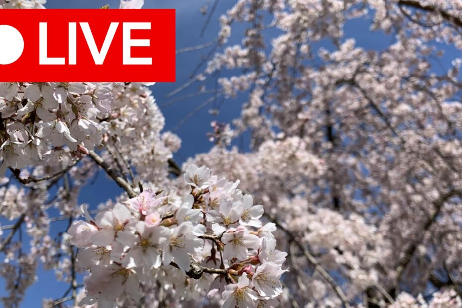 "A ""live"" broadcast button over flowering branches"