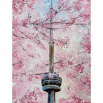 Week 4: CN Tower Cherry Blossoms