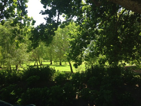The lush green gardens at Anthonij Rupert Wines.