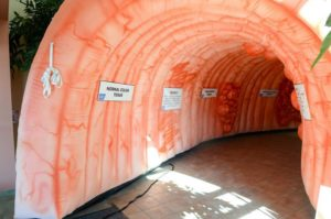 Giant Inflatable Colon On Display