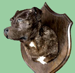 Wall mount dog hunting trophy.