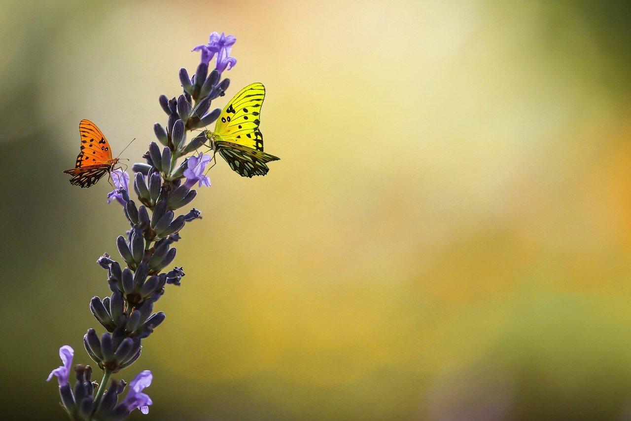 nature, animal world, flower