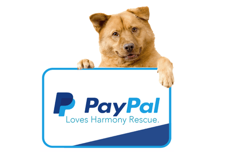 Support Harmony Rescue, Donate Today