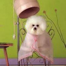 Help! The groomer nicked my pet!