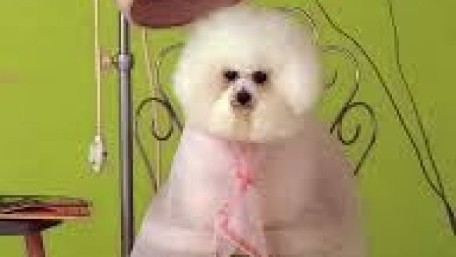 Help! The groomer nicked my pet!