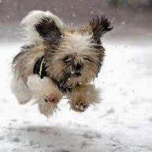 Cold weather tips for your pets