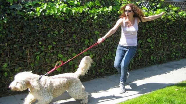 Leash pulling and how to take a pleasant walk with your dog