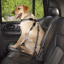 Car Manners for your Dog