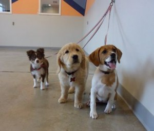 three pups on wall