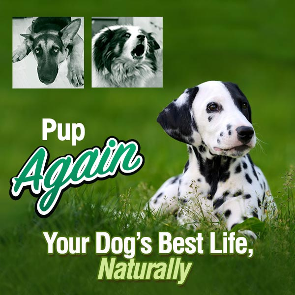 Pup Again Your Dog's Best Life, Naturally