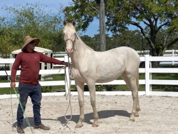young white filly named dolche with man