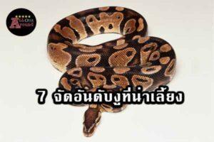 7 อันดับงูที่น่าเลี้ยง