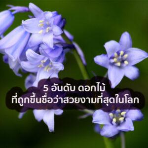 ดอกไม้สวยงามที่สุดในโลก ดอกไม้ ชนิดไหนจะเป็นดอกไม้ที่สวยที่สุด