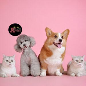 5 อันดับ สัตว์ ที่คนนิยมนำมาเลี้ยงเป็นเพื่อน.