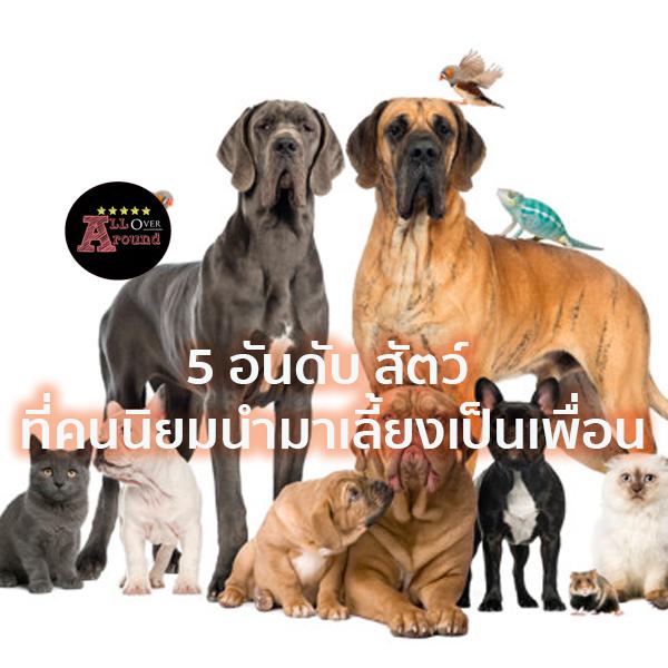 5 อันดับ สัตว์ ที่คนนิยมนำมาเลี้ยงเป็นเพื่อน