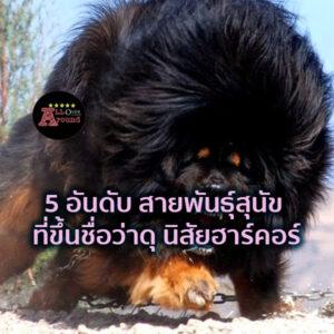 5 อันดับ สายพันธุ์สุนัข ที่ขึ้นชื่อว่าดุ นิสัยฮาร์คอร์