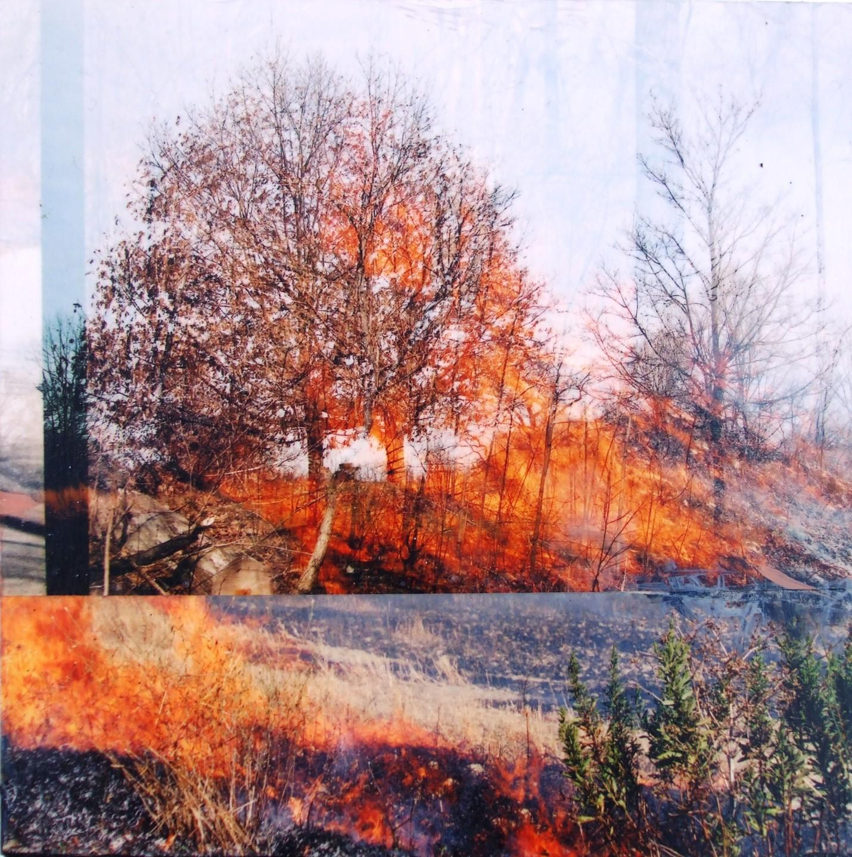 Burn with Maple. Frances Patella