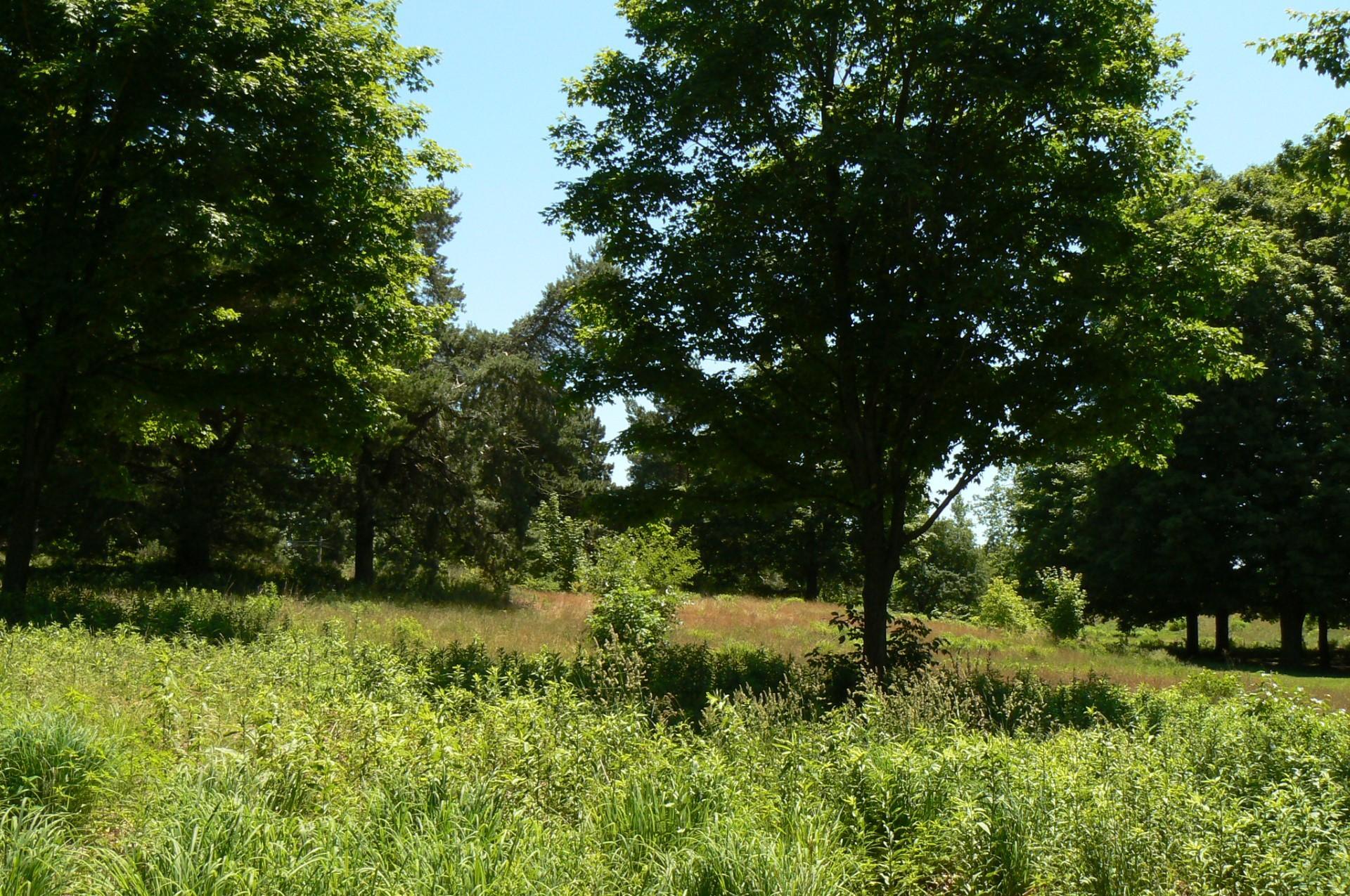 Oak savannah. Photo: Karen Yukich