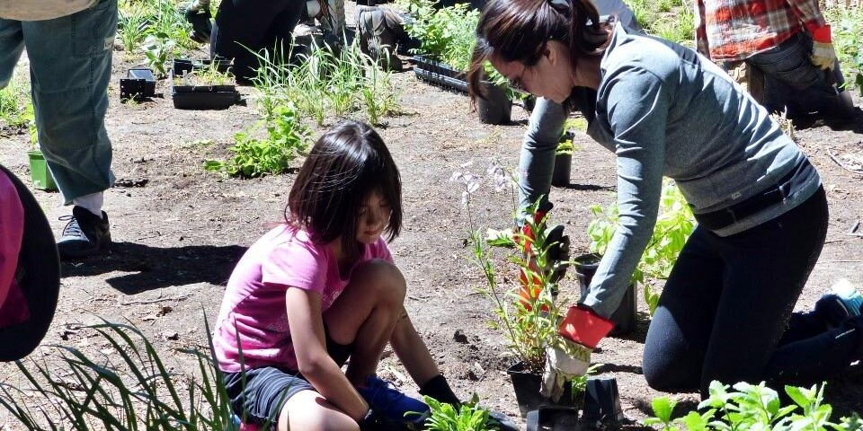 Stewards planting native plants. Photo: Sharon Lovett