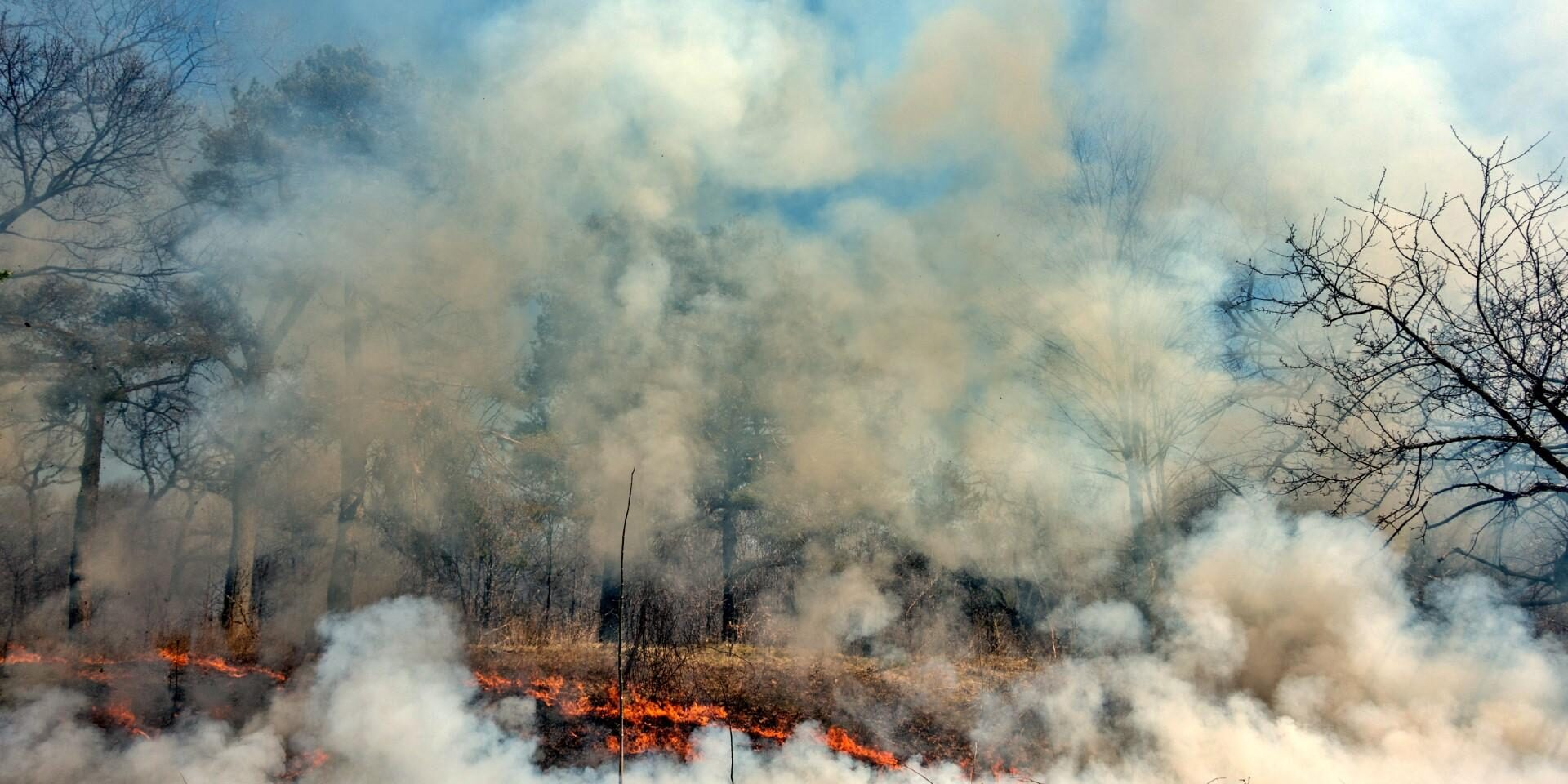 Prescribed Burn 2015. Photo: Oliver Pauk