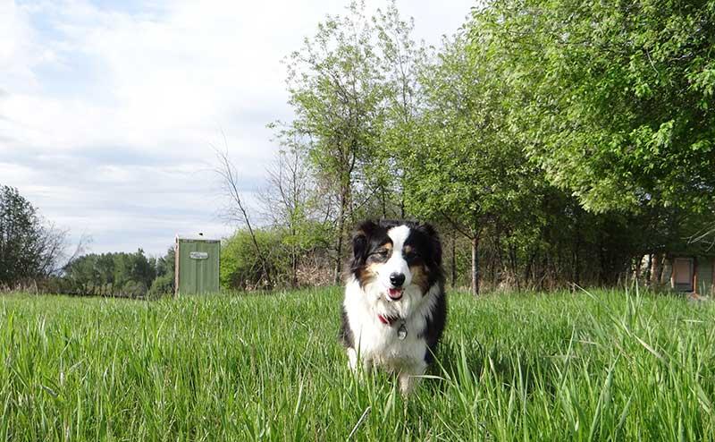 Stella in the Grass