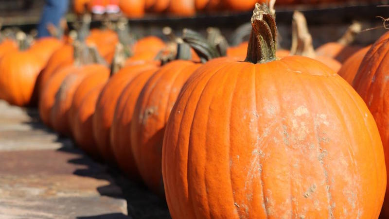 September Events Not to Miss in Homewood