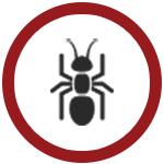 Termite Control & Inspection Toronto