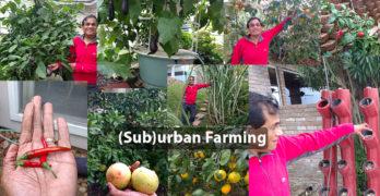 Dr. Kris Bhat (sub)urban farming