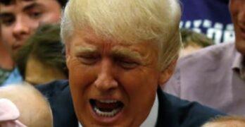 Donald Trump 2020 race