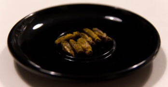 Edible bugs Edible insects