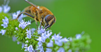 """• What is a """"pollinator lawn"""" and how can I make one in my backyard?"""