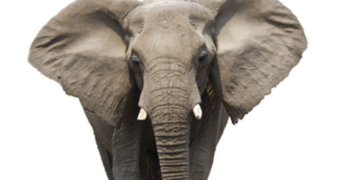 The elephant in the Texas voting booth that neither party wants to talk about.